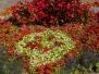 Rabaty kwiatowe w Sanoku 2017