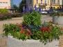 Rabaty kwiatowe w Sanoku 2012