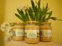 Sprzedaż miodu, odkłady pszczele