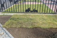 Trawnik z rolek