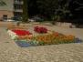 Rabaty kwiatowe Sanok 2016r